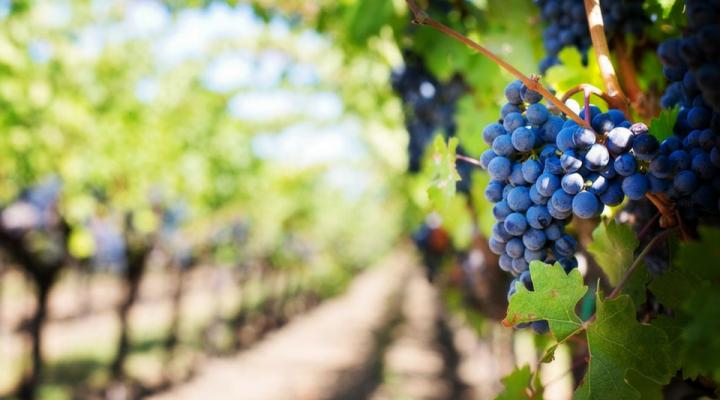Vino vegano: rapporto Netnologia